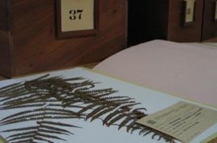 O acervo conta com aproximadamente 120 mil exemplares de plantas.