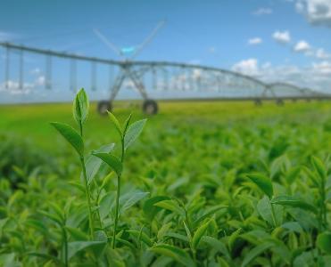 Raks Tecnologia Agrícola lança curso online sobre manejo da irrigação